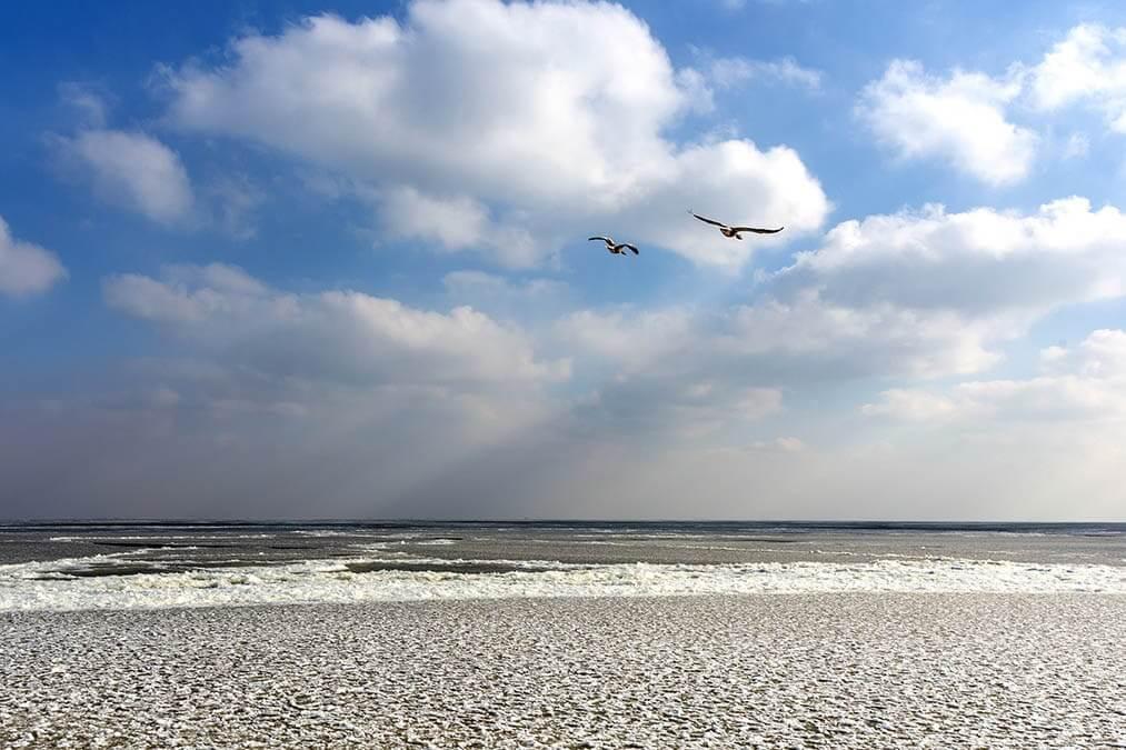 Ganzen boven het IJsselmeer in de winter